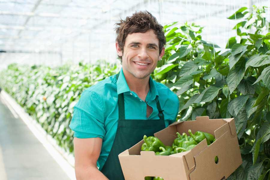 Settore agricolo: quali fondi e finanziamenti